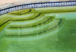 Get Rid of Algae in Pool